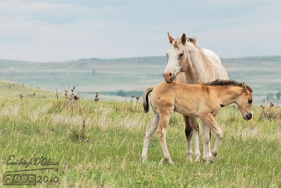 On the way to the park we passed by a field with a number of mares still nursing what looked to be very young colts.